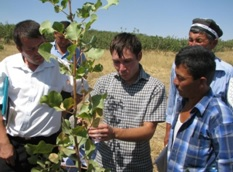 A forestry specialist - Timur Tulyaganov trains farmers on inoculation technique as Gal Aral point of growth